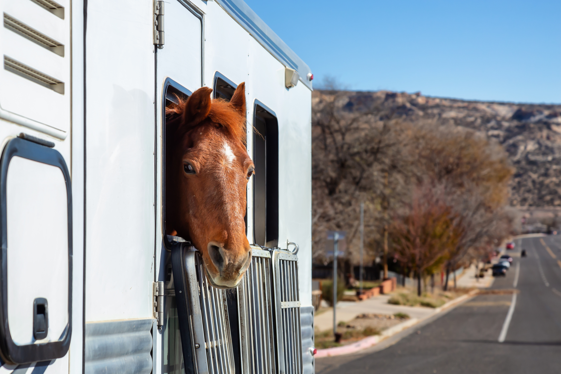 Picture for category New Horse Trailers